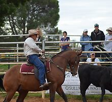 2014 Yass Show Team Penning i by Kate Howarth