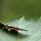Painted Lady Butterfly - Cradled by Debbie Oppermann