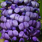 Purple Blossoms by lorilee