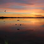 Scamander sunrise  #7125 over the lagoon by gaylene