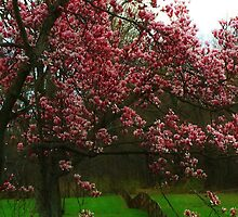 Pink Tree by Randy Duggan