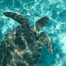 Turtle by KerryPurnell