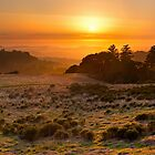 Easy Living - Russian Ridge California by Matt Tilghman