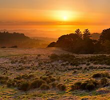 Easy Living - Russian Ridge California by Matt Tilghman