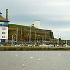 Swans in Whitehaven harbour by photoeverywhere