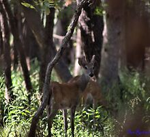 Buck and Doe by DRCP