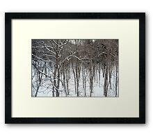 woodland snow scene Framed Print