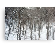 woodland snow scene Metal Print