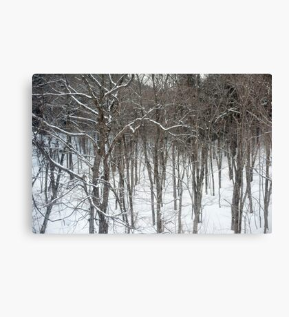 woodland snow scene Canvas Print