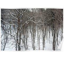 woodland snow scene Poster