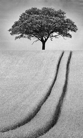 The Tree by Patricia Jacobs DPAGB LRPS BPE4