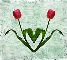 Tulip Heart Photographic Print