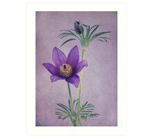 Easter Flower Art Print