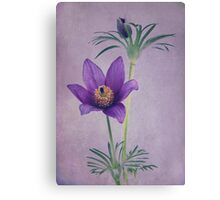 Easter Flower Canvas Print