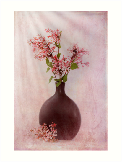 Study In Pink by Patricia Jacobs CPAGB LRPS BPE3