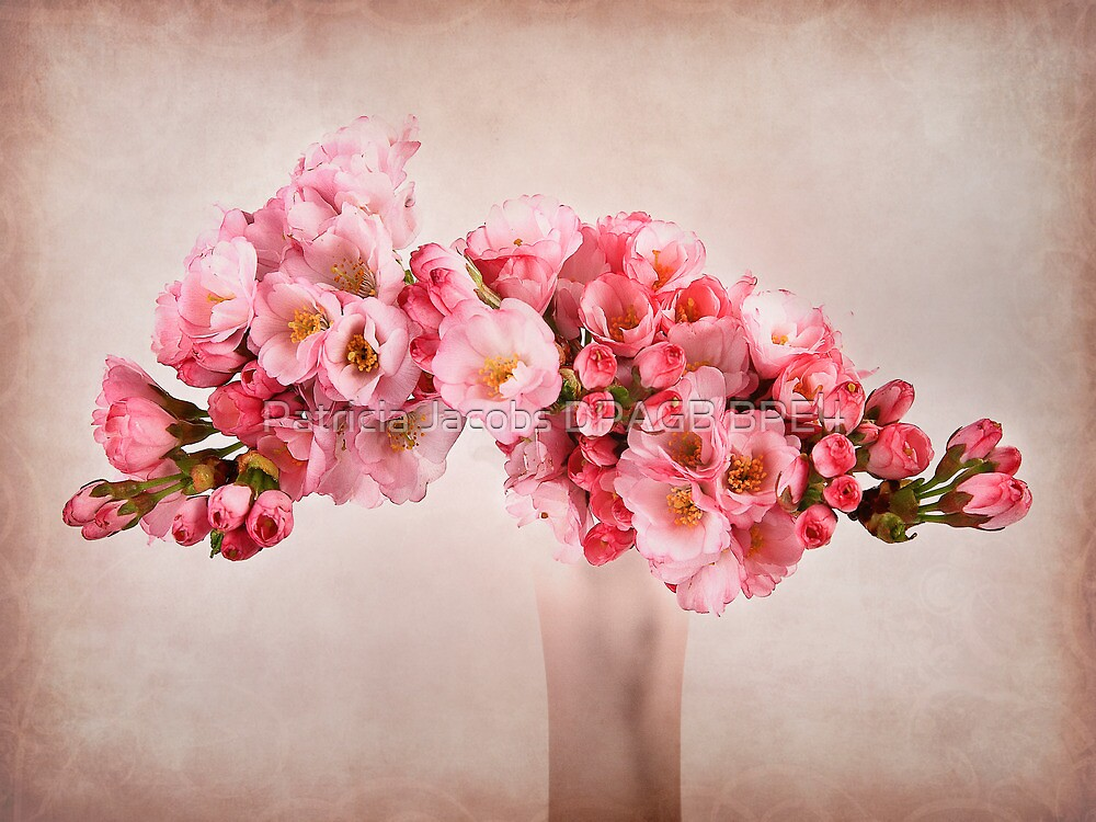 Pink Blossom by Patricia Jacobs CPAGB LRPS BPE4