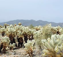 Cactus Garden landscape by photoeverywhere