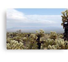 Cholla Cactus Garden Vista Canvas Print