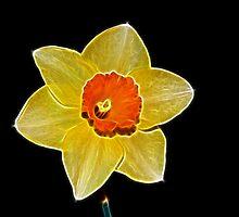Fractalius Daffodil by lisa1970