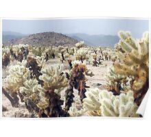 Cactus Garden Details Poster