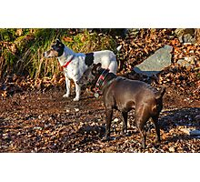 Terrier Twosome Photographic Print
