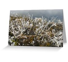 frost winter plants Greeting Card