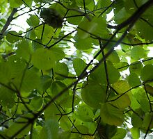 Large green leaves giving shade by photoeverywhere