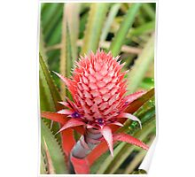 pineapple growing Poster