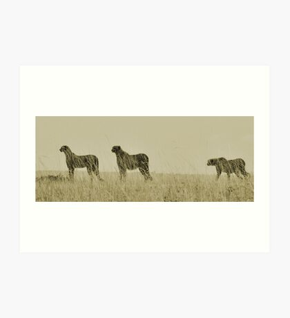 Mother and her subadults preparing for a hunt Art Print
