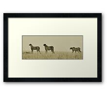 Mother and her subadults preparing for a hunt Framed Print