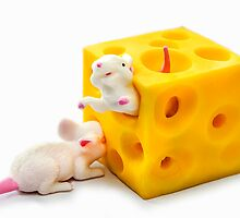 Mice on Cheese by MMPhotographyUK