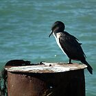 Cormorant At West Bay, Dorset UK by lynn carter