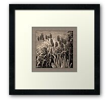 old timey tulips (square) Framed Print