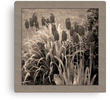 old timey tulips (square) Canvas Print