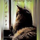 Feline Missing You Always by Terri Chandler