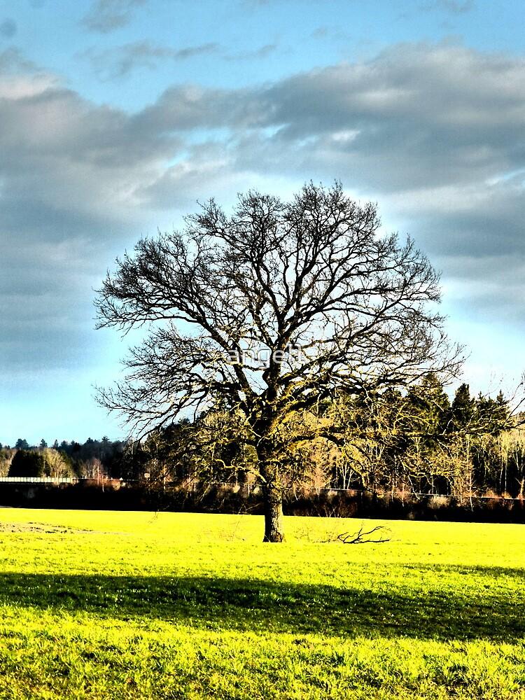 A Single Tree by ©The Creative  Minds