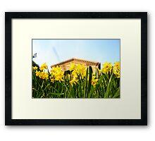 Alexandra Palace Daffodils 1 Framed Print