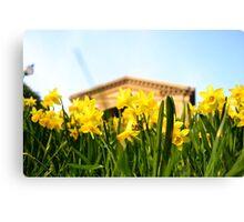 Alexandra Palace Daffodils 1 Canvas Print