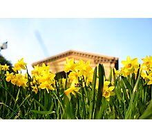 Alexandra Palace Daffodils 1 Photographic Print