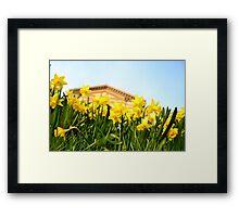 Alexandra Palace Daffodils 2 Framed Print