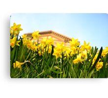 Alexandra Palace Daffodils 2 Canvas Print