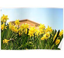 Alexandra Palace Daffodils 2 Poster