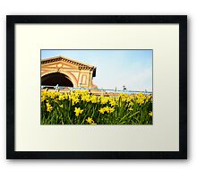Alexandra Palace Daffodils 3 Framed Print