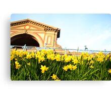 Alexandra Palace Daffodils 3 Canvas Print