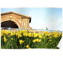Alexandra Palace Daffodils 3 Poster