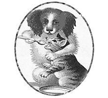 Dog feeding cat Photographic Print