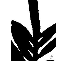 Green Fern Black and White Photographic Print