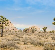 valley of joshua trees by photoeverywhere