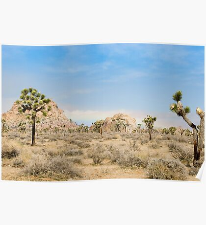 valley of joshua trees Poster