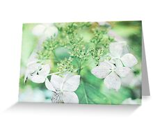 Pink Lacecap Hydrangea Flower Greeting Card